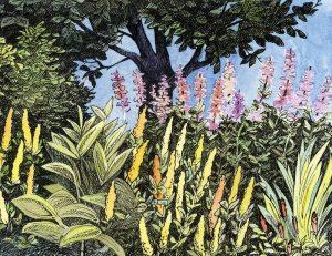 Blomster - Akvarel og tusch